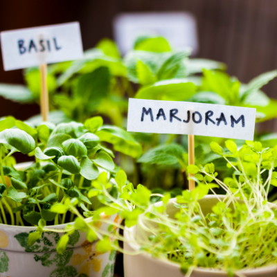 herb garden - 35 Clutter-Free Holiday Gift Ideas